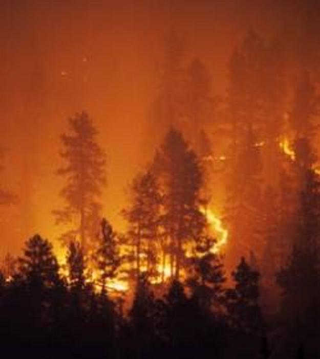 Incendies de forêts en russie : 50 morts, la canicule sévit toujours
